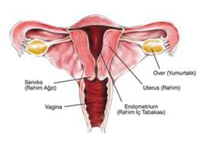Kadın Hastalıkları ve Doğum Uzmanı Jinekolog Onkolog Prof