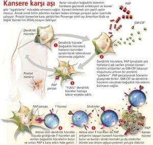 kanser-hucresi