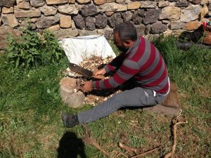 Geven otu,Astragalus